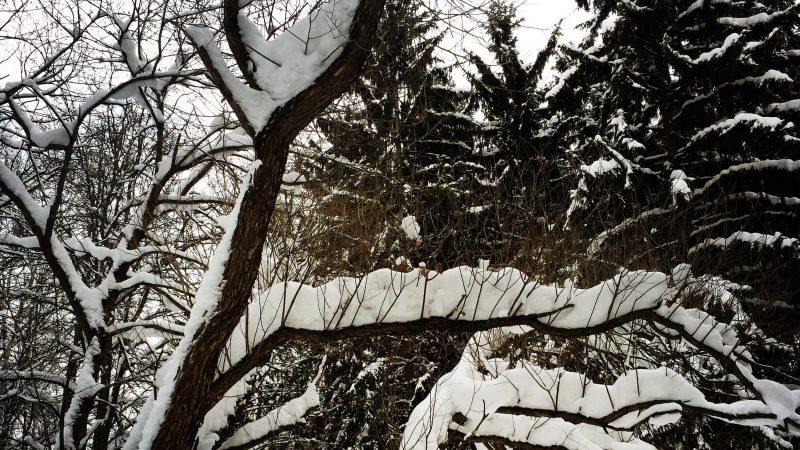 В зимнем парке, январь 2016 года